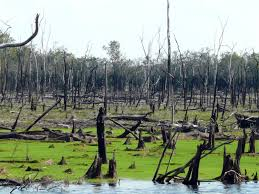 floodplains are weak spot of amazon forest