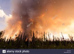 Canadian Wildland Fire Training by A Forest Fire Near Prince George Bc Canada Stock Photo Royalty