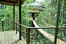 forest retreat remote jungle tree house hotel urbanist