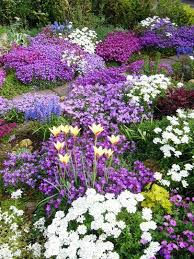 ideas for a rockery for great rock garden plants check out my