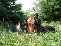 belgian shepherd ontario breeders font size u003d
