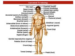 Human Anatomy And Physiology Terminology Introduction Anatomy For Physiotherapists
