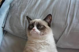 Meme Generator Grumpy Cat - grumpy cat bed meme generator imgflip
