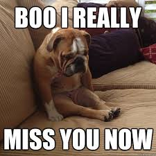 Missing You Meme - 15 dog memes to cheer up your day bloggapedia