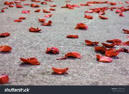 red rose petals on floor stock photo 133607135 shutterstock