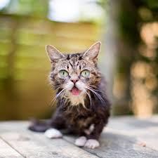 alimentazione casalinga gatto i gatti con la struvite la storia mio gatto ettore a mici
