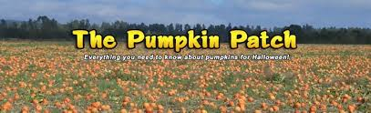 pumpkin patch everything you ever wanted to know about pumpkins