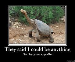 Turtle Memes - turtle meme humor pinterest turtle meme turtle and meme