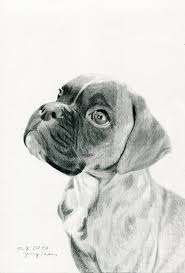 boxer puppy pencil drawing by jenthams on deviantart