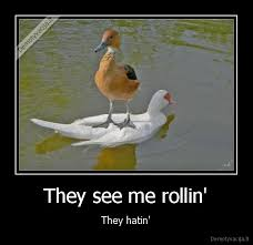 They See Me Rollin Meme - they see me rollin they hatin hamster they see me rollin they