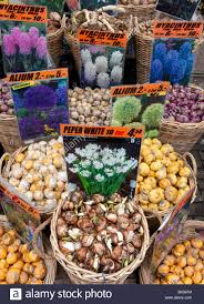 flower bulbs for sale in flower market in central amsterdam in