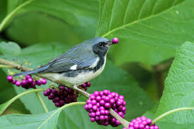 american native plants nursery plants for birds plant it and they will come ecological