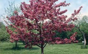 a flowering tree gardening flower and vegetables