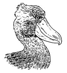 the shoebill or the most terrifying bird in the world audubon