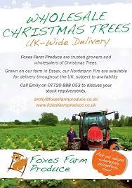 wholesale christmas trees christmas tree farm essex upminster