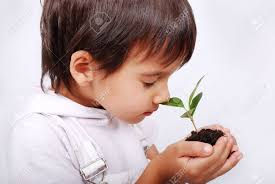 Cute Child by Little Cute Child Holding Green Plant In Hands Stock Photo