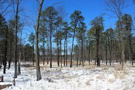 walking man 24 7 kings highway barrens albany pine bush