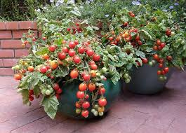 the secret to container vegetable gardening mnn mother nature