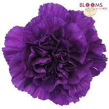 purple carnations purple moonshade carnations wholesale bloomsbythebox