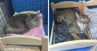 ikea furniture donation ikea canada makes the cutest donation for shelter cats