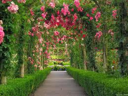 wallpaper flower red rose red rose flower garden wallpaper http refreshrose blogspot com