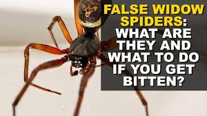 How To Keep Spiders Out Of Your Bed 8 Ways To Keep Spiders Out Of Your House As Notorious False Widows