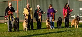 belgian sheepdog association northern belgian shepherd dog club home facebook