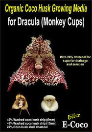 Orchid Bark Dracula Orchids Compost Orchid Bark Substitute Orchid Soil For