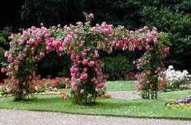 All Year Flowering Shrubs - gardening calendar october jobs to do in gardenseeker com