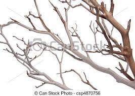 decorative tree branches manzantia decorative branches manzantia decorative tree stock