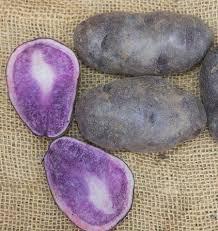 blue seed russian blue organic seed potatoes