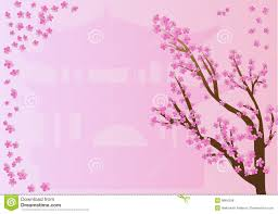 cherry blossoms on pink design stock illustration illustration