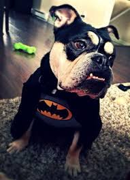 French Bulldog Costumes Halloween Future Dog Halloween Baby Bulldogs