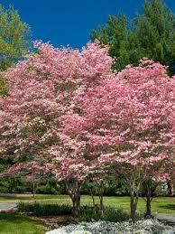 flowering trees diy