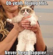 Grumpy Cat Meme Happy - top 25 grumpy cat memes grumpy cat meme grumpy cat and captions