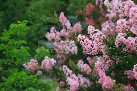 hillsborough county homegrown hillsborough woody ornamentals