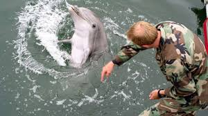 Seeking Dolphin In Defence How The Uses Marine Mammals