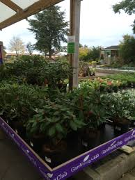 community garden layout garden pots and planters wyevale home outdoor decoration