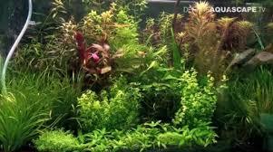 Aquascaping Plants Pet Habitat South Africa