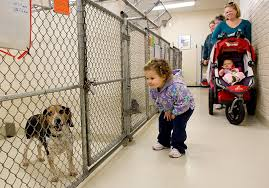 Dogs For The Blind Adoption Identify Adoption Blind Spots Animal Sheltering Online By The