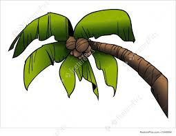 plants coconut palm stock illustration i1448564 at featurepics
