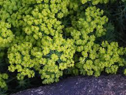 native shade plants evergreen plants for shade darxxidecom