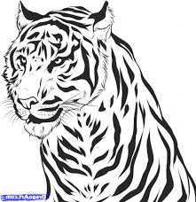 tiger black and white drawing how to draw a realistic tiger draw