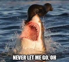 Gay Seal Meme Generator - 48 best bo meme an rhapsody images on pinterest funniest