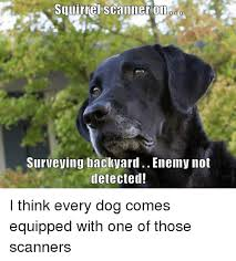 Scanners Meme - squirrel scanner on surveying backyard enemy not detected i think