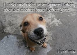 lustige hundesprüche hundesprüche hunde