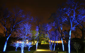 Tree Lights Landscape by Landscape And Architectural Absolute Lighting