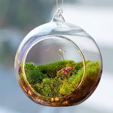 terrarium ball globe shape clear hanging glass vase flower plants