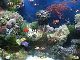 new tropical fish supplier company listings aquafind