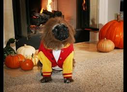 Chihuahua Halloween Costumes Dogs Cats Wearing Halloween Costumes Cats Dogs Halloween 9
